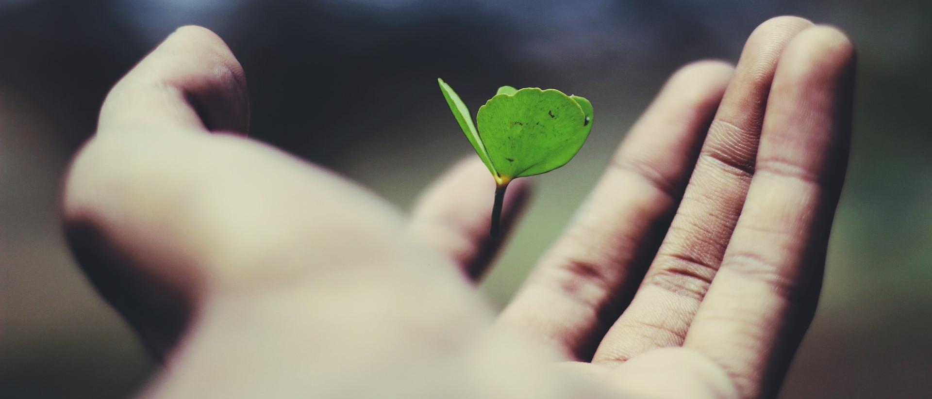 Hand schützend um eine Pflanze